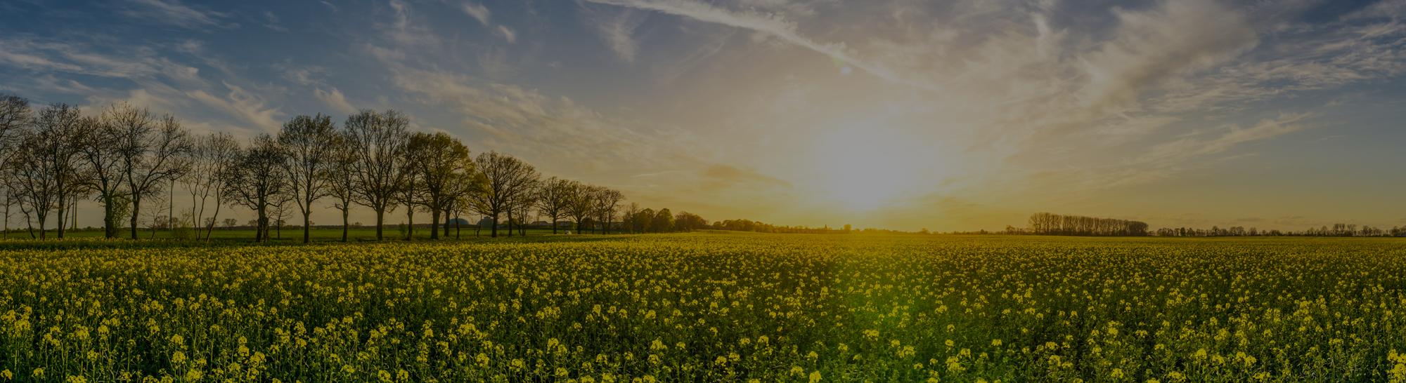 Groene energie voor een betere wereld